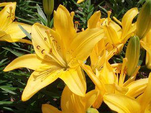 Желтые цветы в букете смотрятся красиво, но могут быть неправильно поняты.