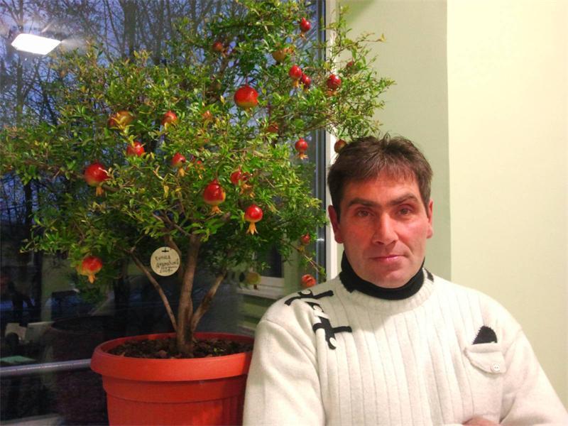 Калерия цветок - уход в домашних условиях, размножение, видео 29