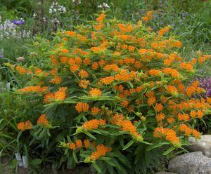 Цветущие все лето однолетние цветы в саду их преимущества в отношении многолетников, названия,