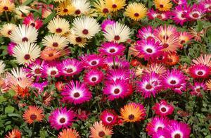 Садовые цветы цветущие все лето фото и названия однолетние
