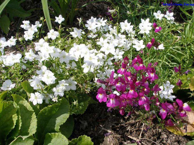 Цветы цветущие все лето однолетние