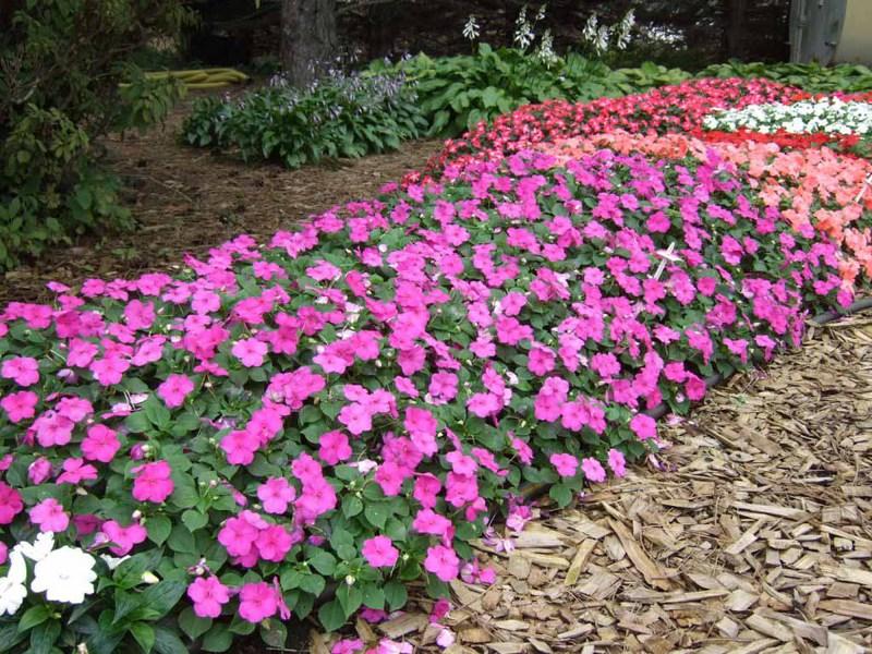 Украшение приусадебного участка с помощью цветов