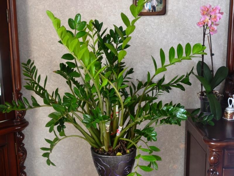 Комнатные цветы с фотографиями