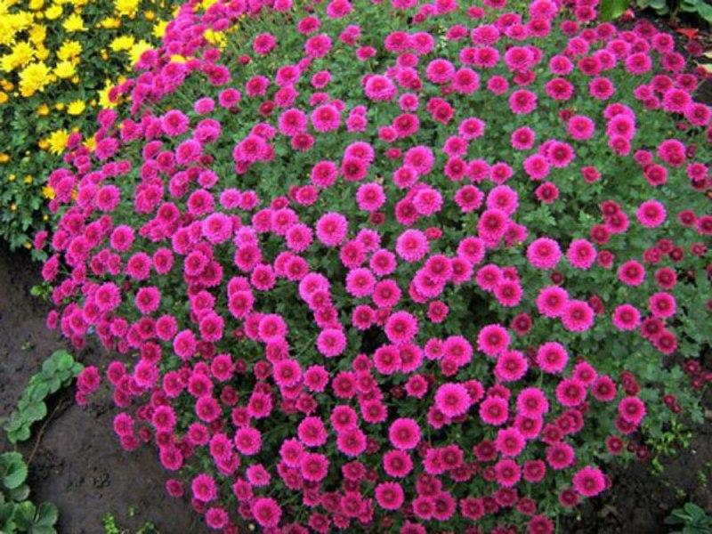 Схемы плетения цветов из бисераКак сделать своими руками