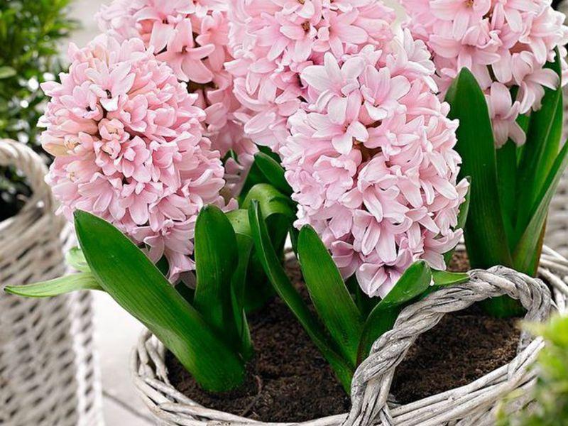 Орхидея с мелким цветком 33