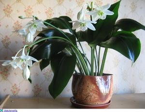 цветы домашние в горшках фото и названия