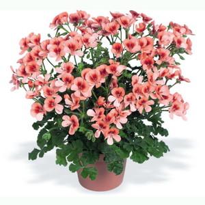 Горшке в цветы красивые