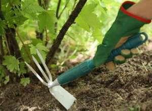 Как вырастить клещевину из семян как и когда сажать в грунт, основные способы выращивания, уход за