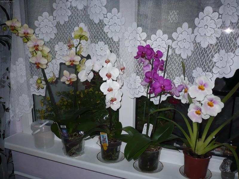 Уход за орхидеями в домашних условиях бесплатно