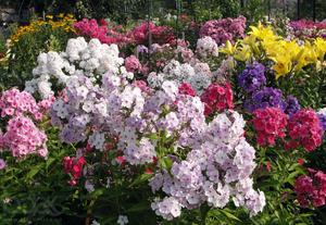 Разные сорта цветов фото