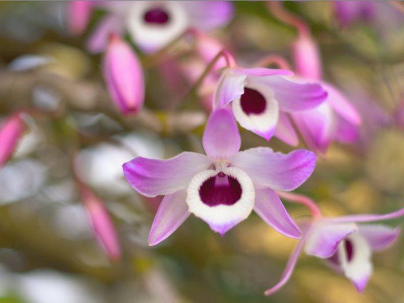 Как купить орхидею