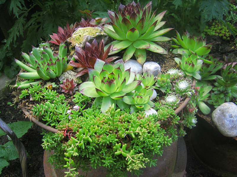 мини сады из суккулентов фото
