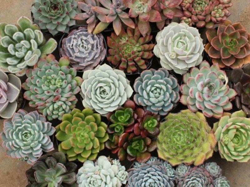 Все виды домашних цветов с их фото