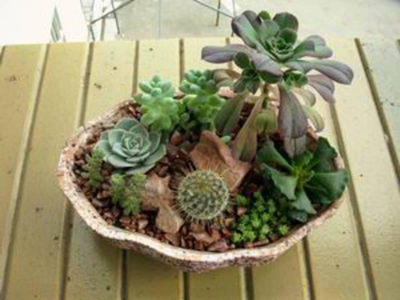 Суккуленты и кактусы отлично сочетаются со всеми натуральными материалами