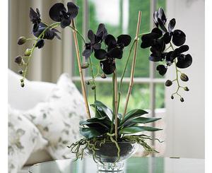 Цвет темной орхидеи