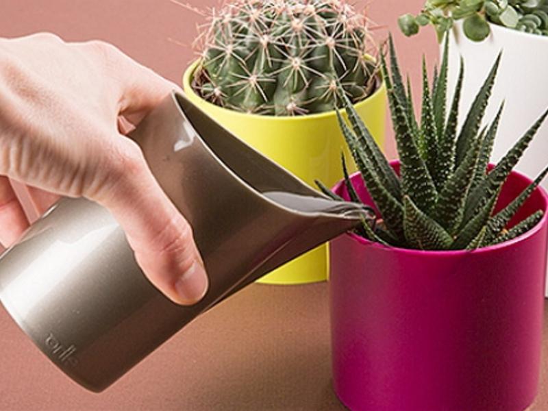 Как зимой поливать кактусы в домашних условиях