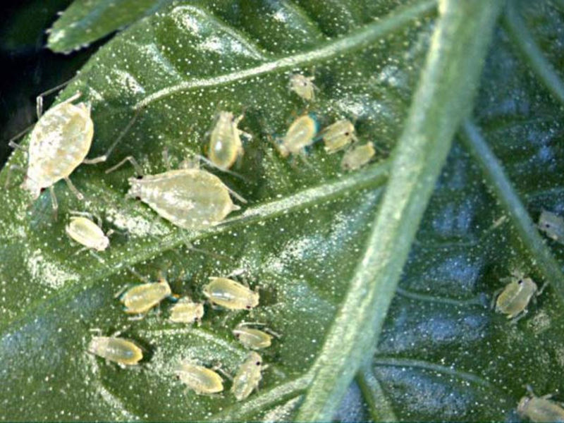 Растворы для опрыскивания листьев