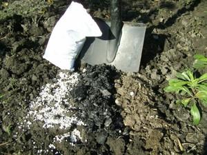 Как выращивать крыжовник сорта, правила посадки и ухода, защита от болезней и советы опытных
