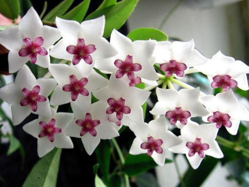 Цветок любви фото и название