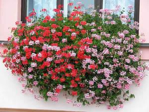 Какие многолетние цветы посадить на альпийской горке: фото