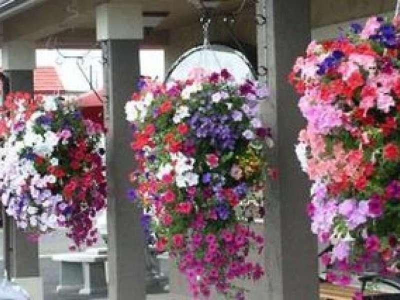 Цветы для балкона фото и названия тенелюбивые