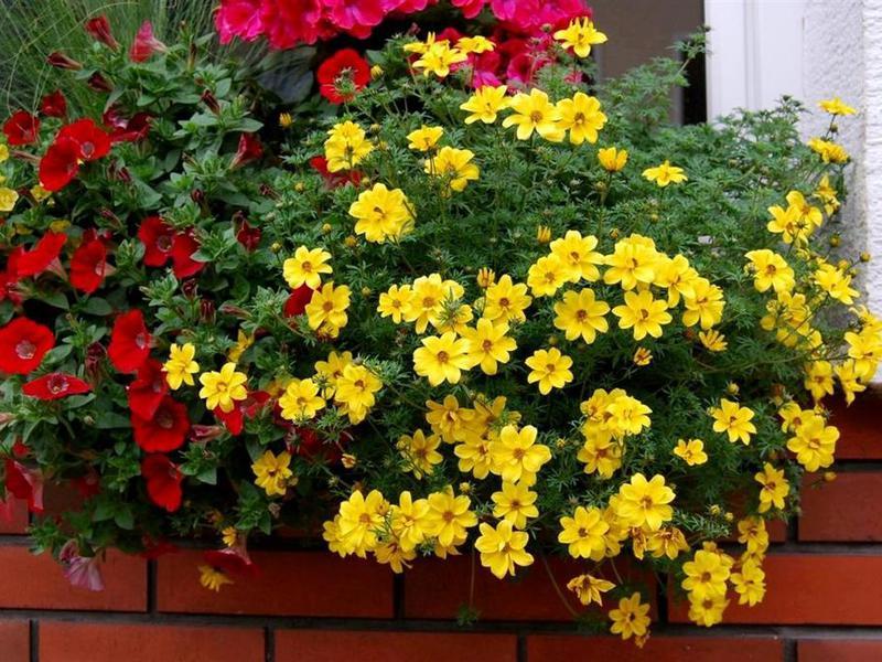 Висячие цветы