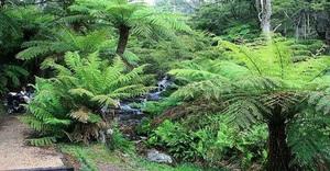 Какие существуют папоротники виды и названия, особенности растений, где растут