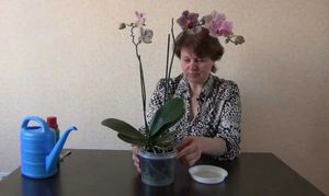 Советы опытных цветоводов, как правильно поливать орхидеи в домашних условиях