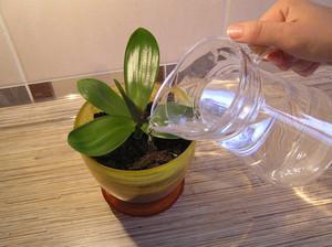 Нюансы выбора воды для полива орхидей