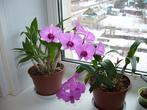 Цветущие комнатные растения фото и названия уход за ними 47