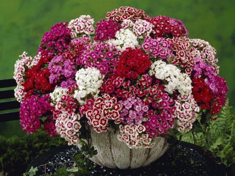 Какой цвет у папоротника