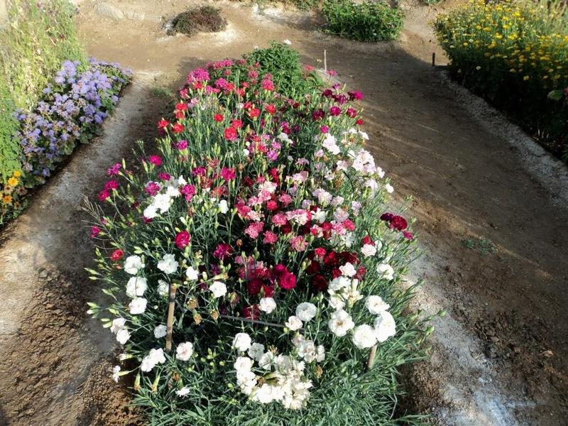 Какие многолетние цветы посадить на альпийской горке фото