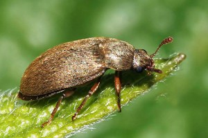 Борьба с жуком