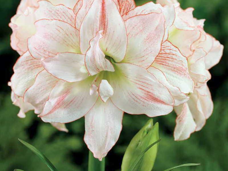 Как правильно заботится о цветке
