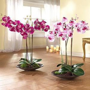 Как вырастить орхидею в домашних условиях