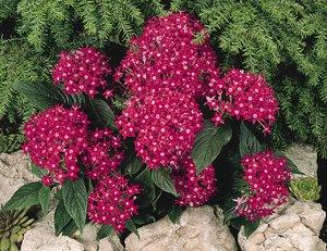 Высокие цветы для сада и огорода фото с названиями для