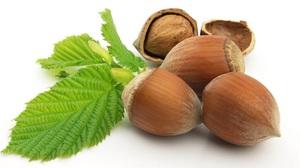 Какие различия имеют лесные орехи и фундук описание лещины и фундука, в чём их разница и