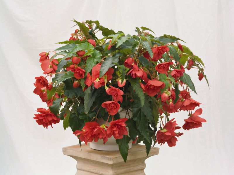 Фото растений - фотокаталог - Алфавитный список растений