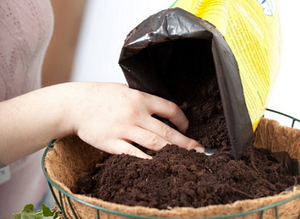 Правила подготовки грунта и ёмкости для выращивания ананаса