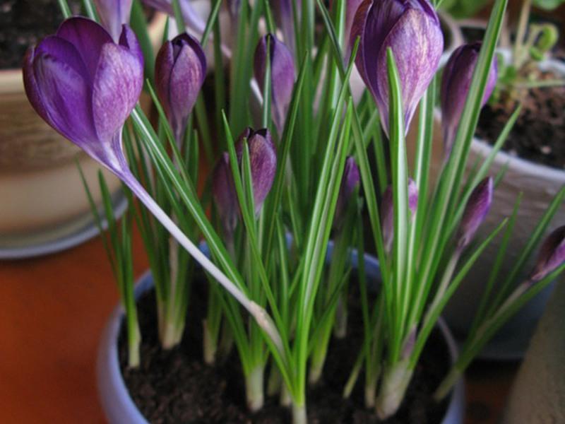Как вырастить цветы в домашних условиях