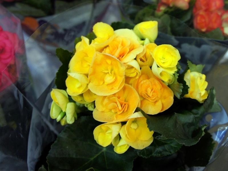 Как выбрать цветок для дома