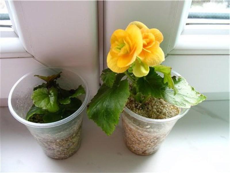Домашние растения: советы по выбору, уходу