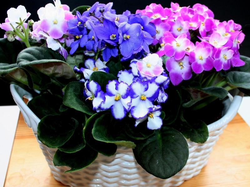 Размножение и посадка растений