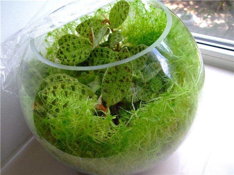 как выглядит мох сфагнум