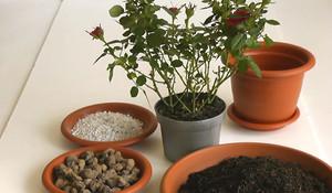 ПЕРЕСАДКА комнатных растений и цветов: как и когда ЛУЧШЕ? 83