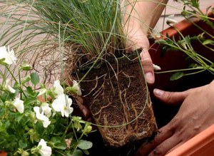 ПЕРЕСАДКА комнатных растений и цветов: как и когда ЛУЧШЕ?