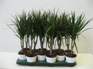 Картинки комнатные растения энциклопедия в картинках