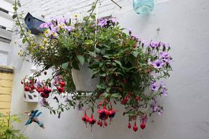 ампельные растения названия и фото
