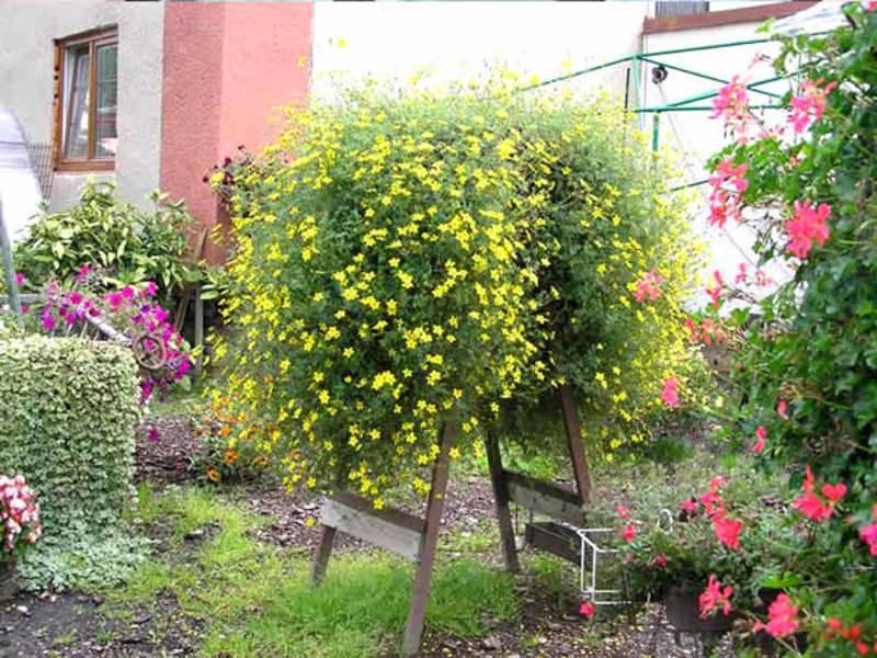 Ампельные комнатные растения: какие виды существуют, их назв.