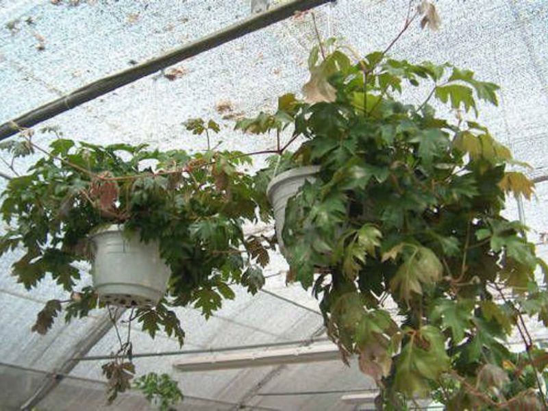 Флориум  Интернет магазин семян саженцев садовых